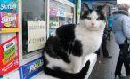 Кот-продавец с проспекта Мира