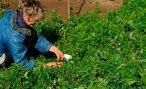 Восстанавливаем плодородие земли на даче