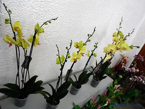 orhidei2