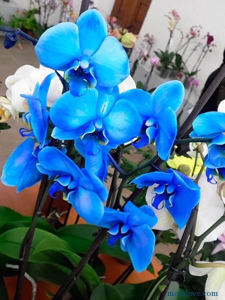 orhidei5