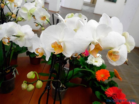 orhidei6